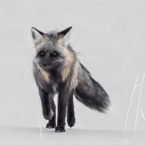 Cros Fox