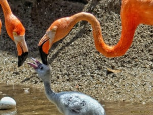 For the Love of - Parents (Flamingos)