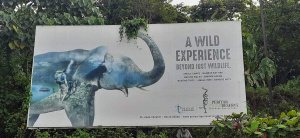Elephant Survive If Forests Survive!
