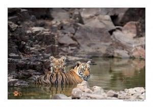 Krishna and Three Cubs