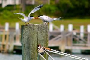 My Tern