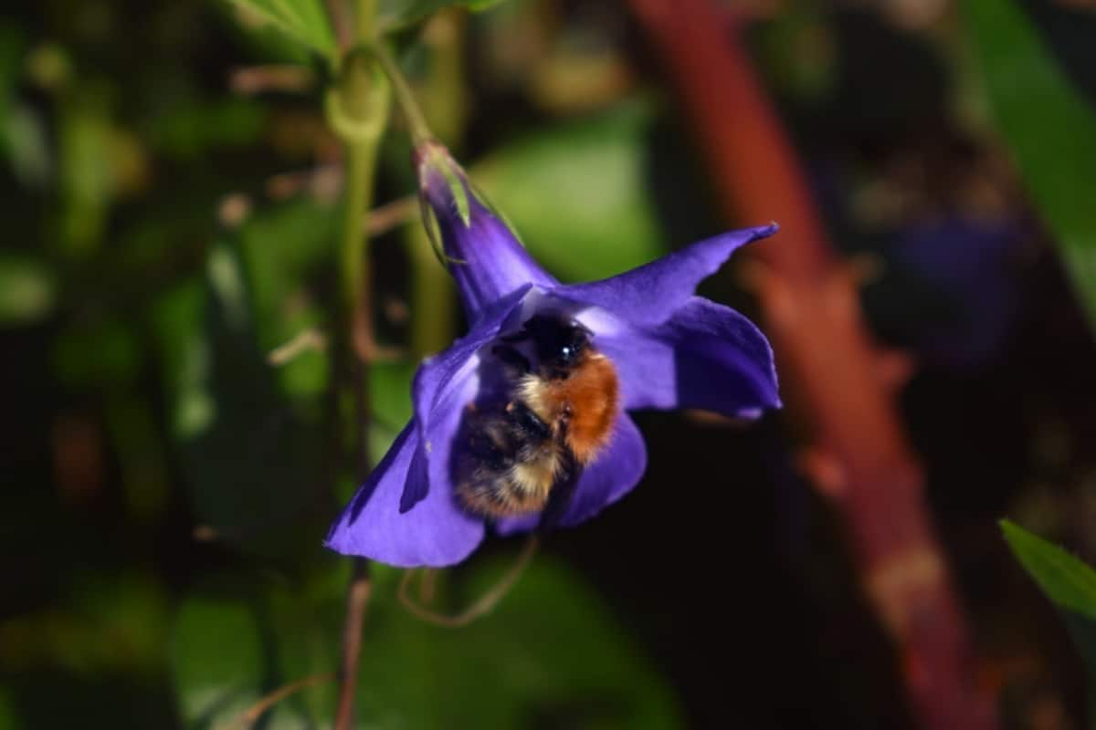 A Bee and a Flower