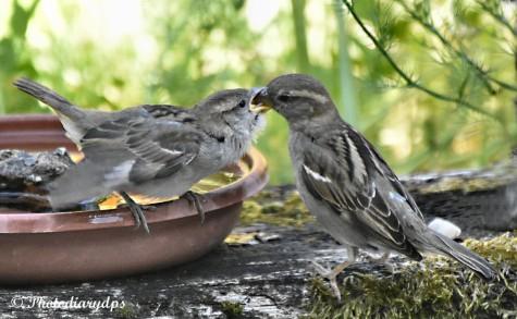 Feed Me, Feed Me Please