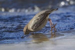 Dipper Takes a Dip