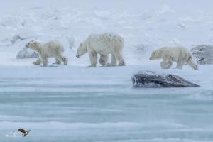 Bears on Ice