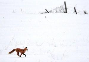 Motion Study: Dancing the Fox Trot
