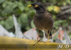 Bird Salunki