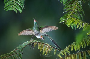 Wings of a Hummingbird