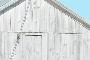 Kestrel Repelling or Zip Lining