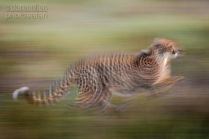 Liquid Speed - Cheetah