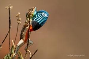 Colorful Male