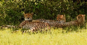 A Little Family Rest in the Bush