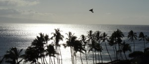 A Myna in Paradise