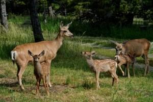 Deer Conversations