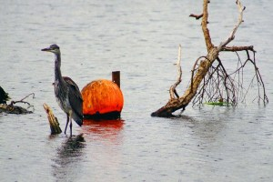 Buoy for a Hiding Place