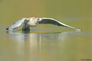 Taking off  from a lake
