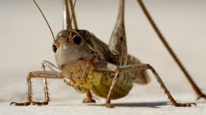 Flying Grasshopper Resting on Stone Pavement