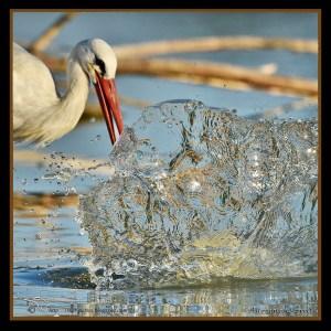 Artwork of a Stork