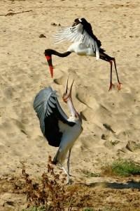 Stork-ings