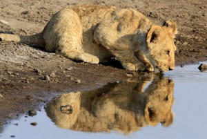 Reflection of a Future King
