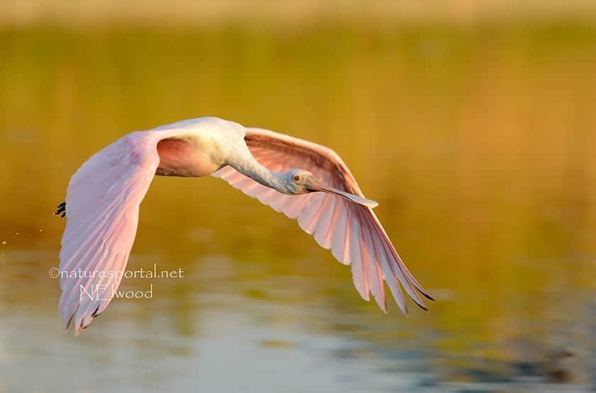 Meet the best wildlife photographers on © WildFocus