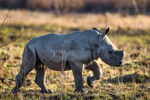Celebrating World Rhino Day