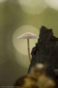 Fungus in Light