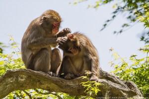 Summer Wildlife in Japan