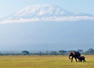 Mt. Kilimanjaro Na Tembo