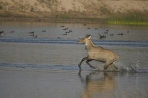 Running Roj in Water