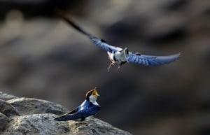 Wingsssssssss