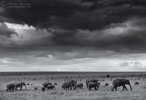 Atmospheric Elephants