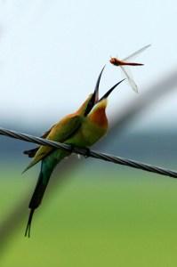 'Catch it' by Jojith Kanjany