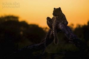 Onset of Darkness by Dana Allen