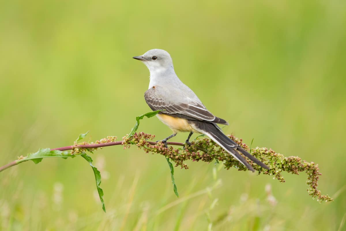Birds » Focusing On Wildlife