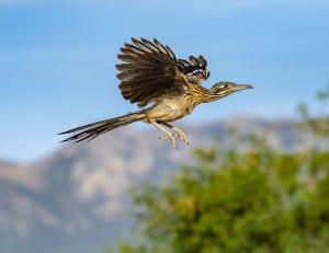 Roadrunner, I Can Fly!
