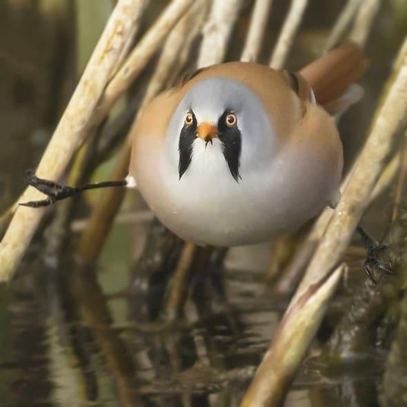Kung Fu ? Angry Bird ?