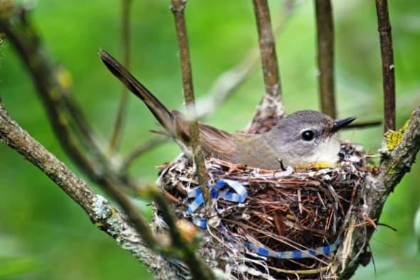 Bird in Its Nest