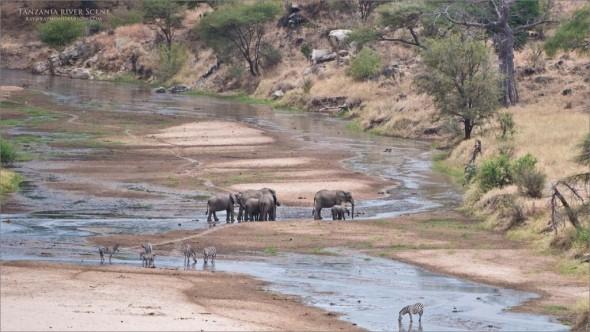 Tanzania River Scene