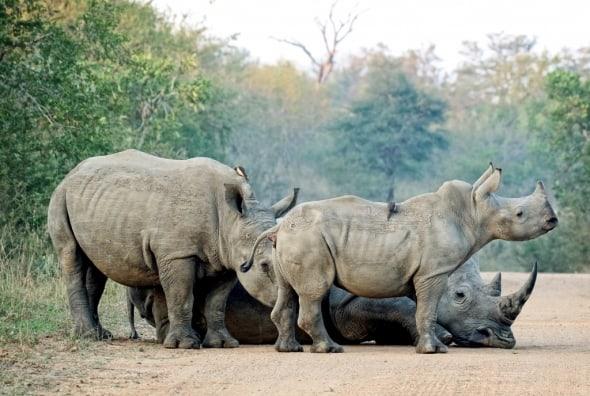 Kruger Family Road Block