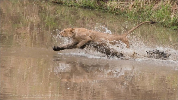 A Dash on Water