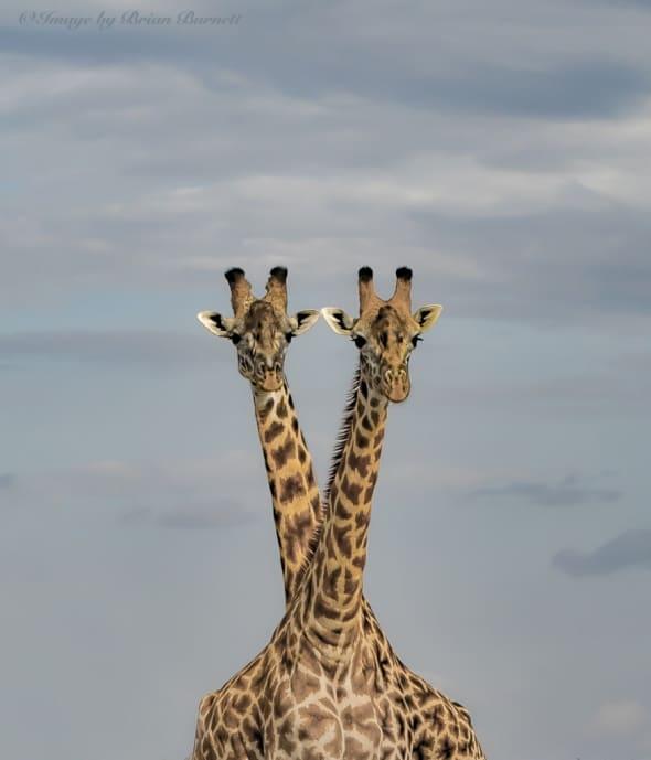 African Duet