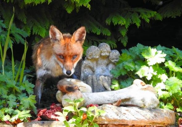 Fox Loves Stoat