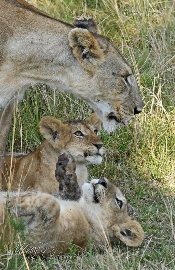 We Love You Mom!