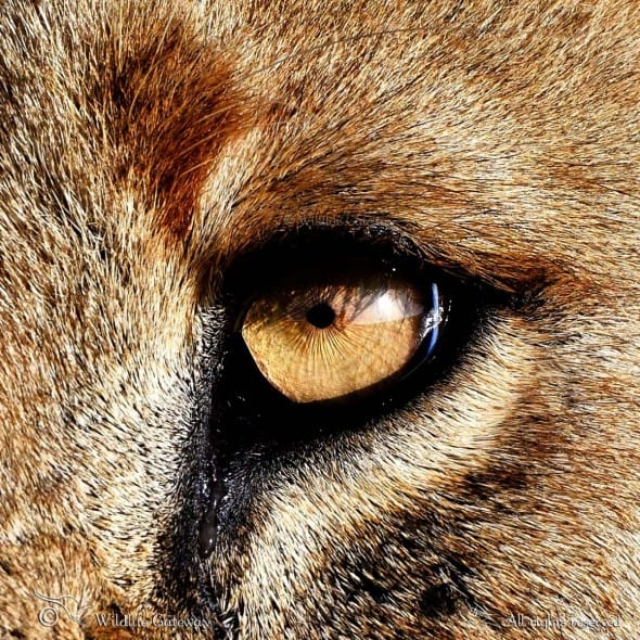Eye of Predation