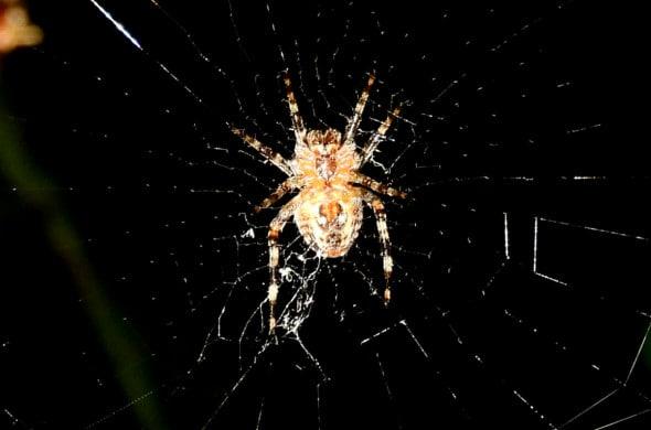 Incy Wincy Spider