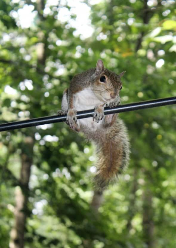 Smiling Squirrel
