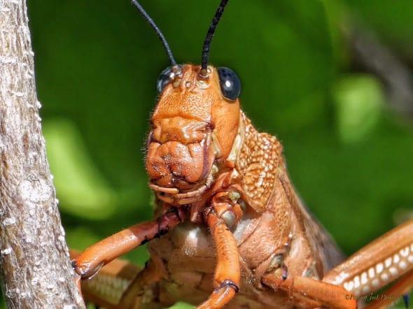 Hidden Beauty of the Locust.