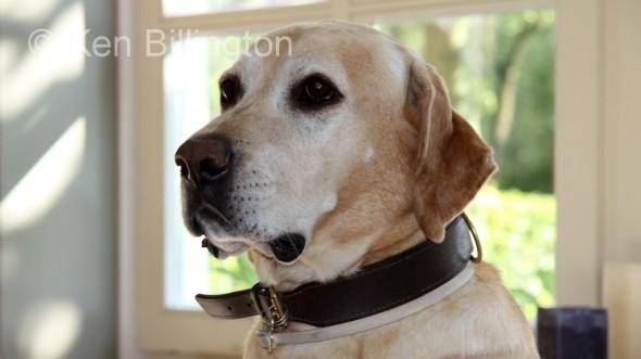 Dog (Canis lupus familiaris) (7)