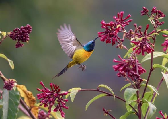 Hovering in Her Garden